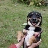 Ten pięcioletni psiak mieszka w schronisku od 2012 roku. Żaba jest psem nieufnym do obcych osób, jednak kiedy już kogoś pozna, jego zachowanie zmienia się o 180 stopni. Żaba uwielbia się przytulać do wolontariuszy, lubi być przez nich głaskany. Obca osoba