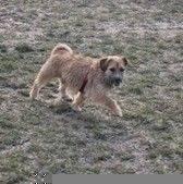 Energiczny dwulatek. Przyjazny zarówno wobec ludzi jak i przedstawicieli swojego gatunku. W kontakcie z psami wykazuje się dużą cierpliwością, uwielbia bawić się z psami. Freddie na smyczy trochę ciągnie, jest spragniony ruchu i troszkę szalony. Jest wykastrowany, zaszczepiony i zaczipowany (967000009399316).