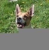 Miłośniczka zabawy, biegania i kąpieli w jeziorach. Nasti to pies, którego rozpiera energia. Jeśli siada – to tylko na chwilę. Będzie idealnym psem do sportu – czy to psich dyscyplin, czy jako towarzyszka w bieganiu. Na pewno potrzebuje aktywn