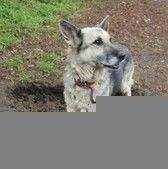 Dziesięcioletnia sunia w typie owczarka niemieckiego. Dora została porzucona przez swojego właściciela wraz z drugą suczką. Jest pieskiem bardzo przyjaznym, zarówno w stosunku do ludzi jak i innych psów. Dora cierpi na typowe dla swojego wieku przypadłości związane ze zwyrodnieniami kręgosłupa, wymaga codziennego podawania leków przeciwbólowych do końca życia. Nie powinna mieszkać w domu z dużą ilością schodów. Sunia ma ok. 10 lat, jest wysterylizowana, zaczipowana (967000009404975) i zaszczepiona.