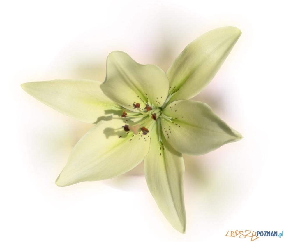 kwiat  Foto: sxc