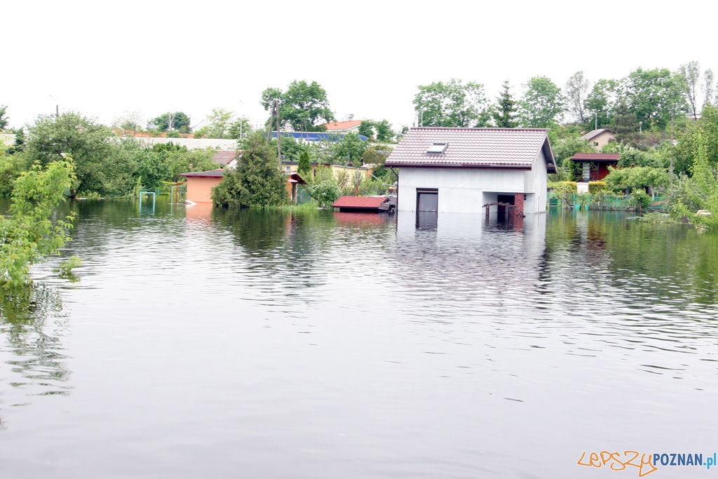 rekordowy poziom Warty  Foto: Piotr Rychter