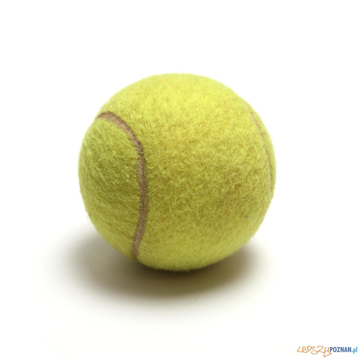 piłka tenisowa  Foto: sxc