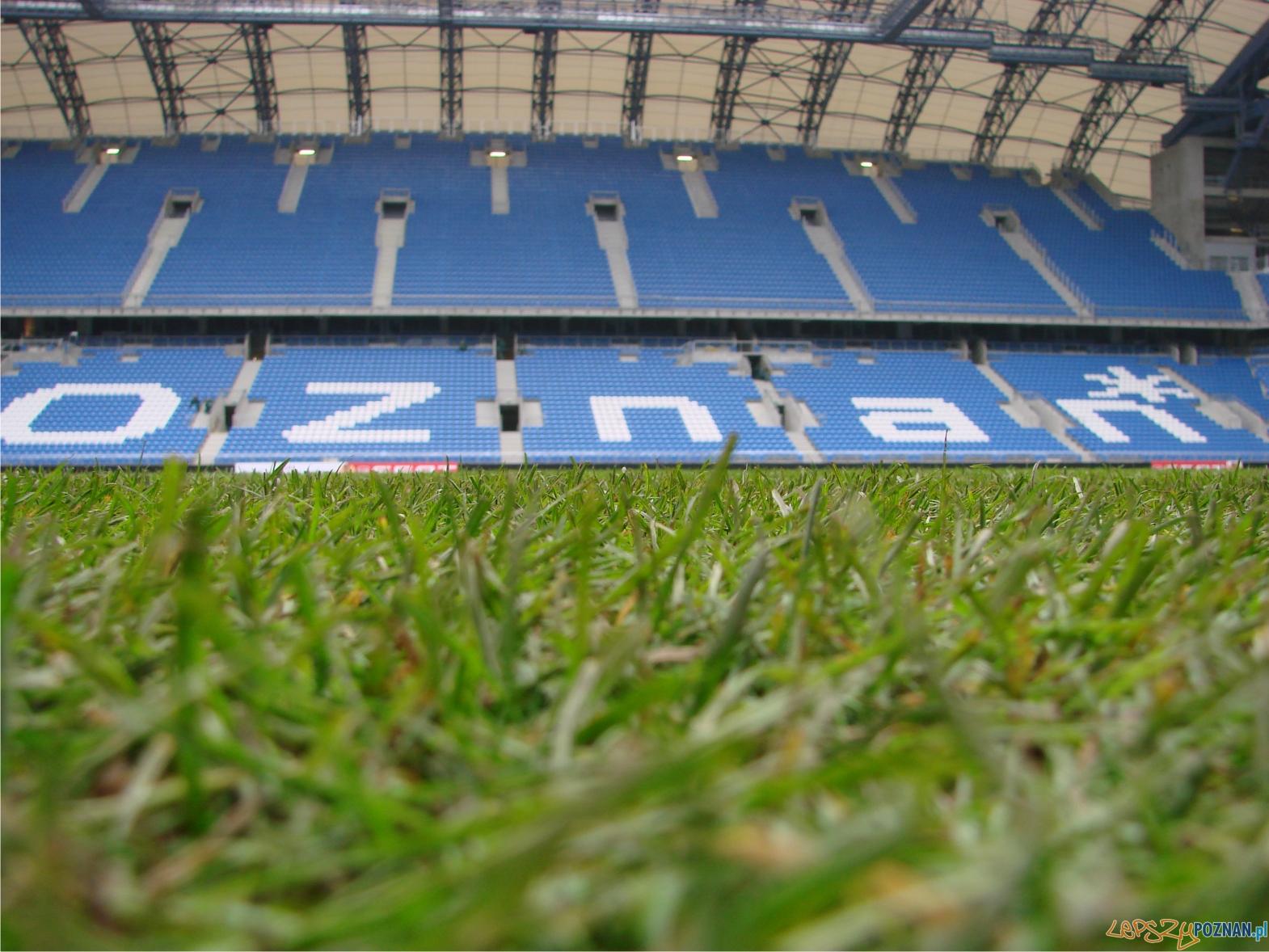 murawa na Bułgarskiej  Foto: lepszyPOZNAN.pl / ag