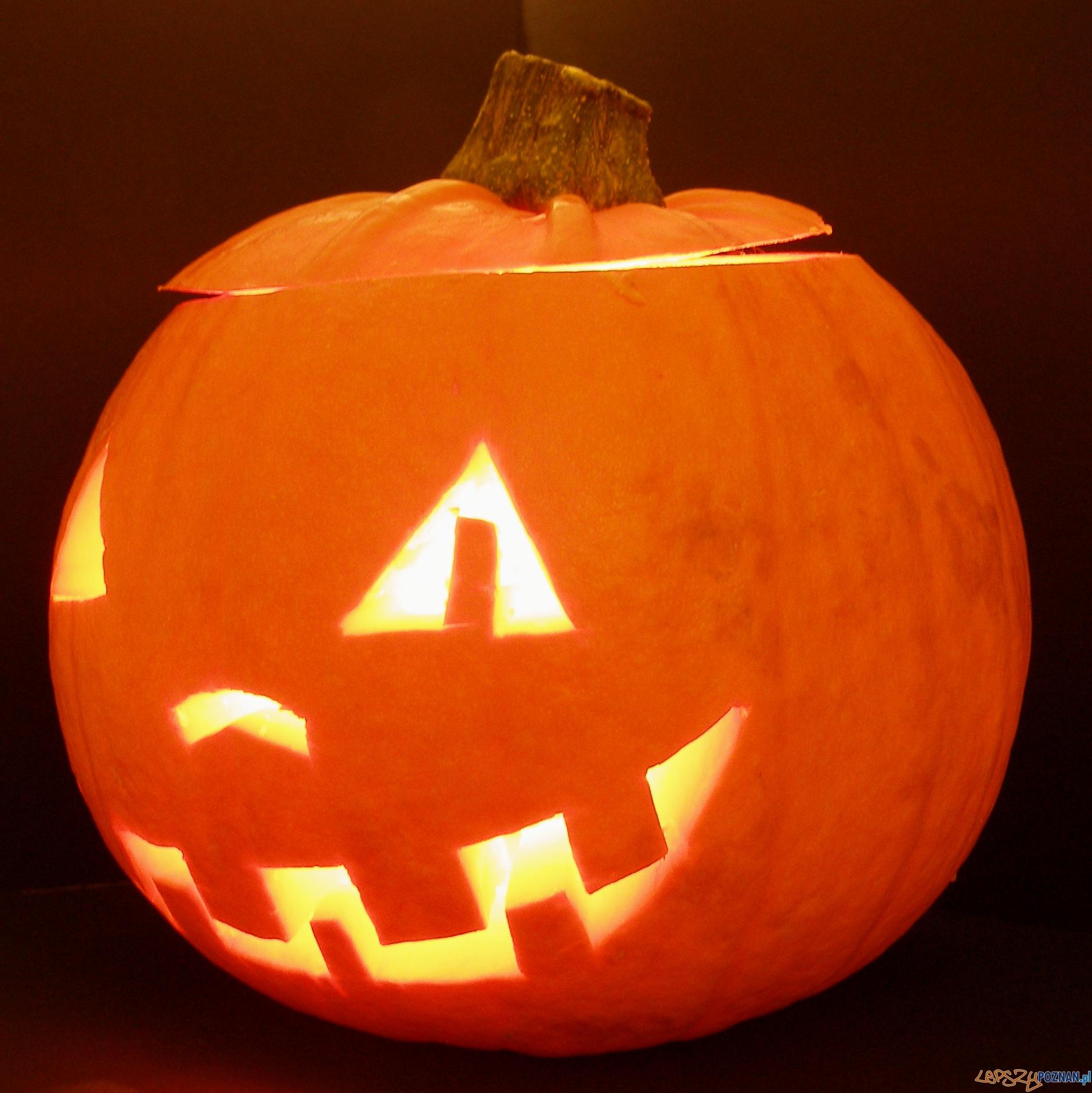 Dynia Halloween  Foto: sxc