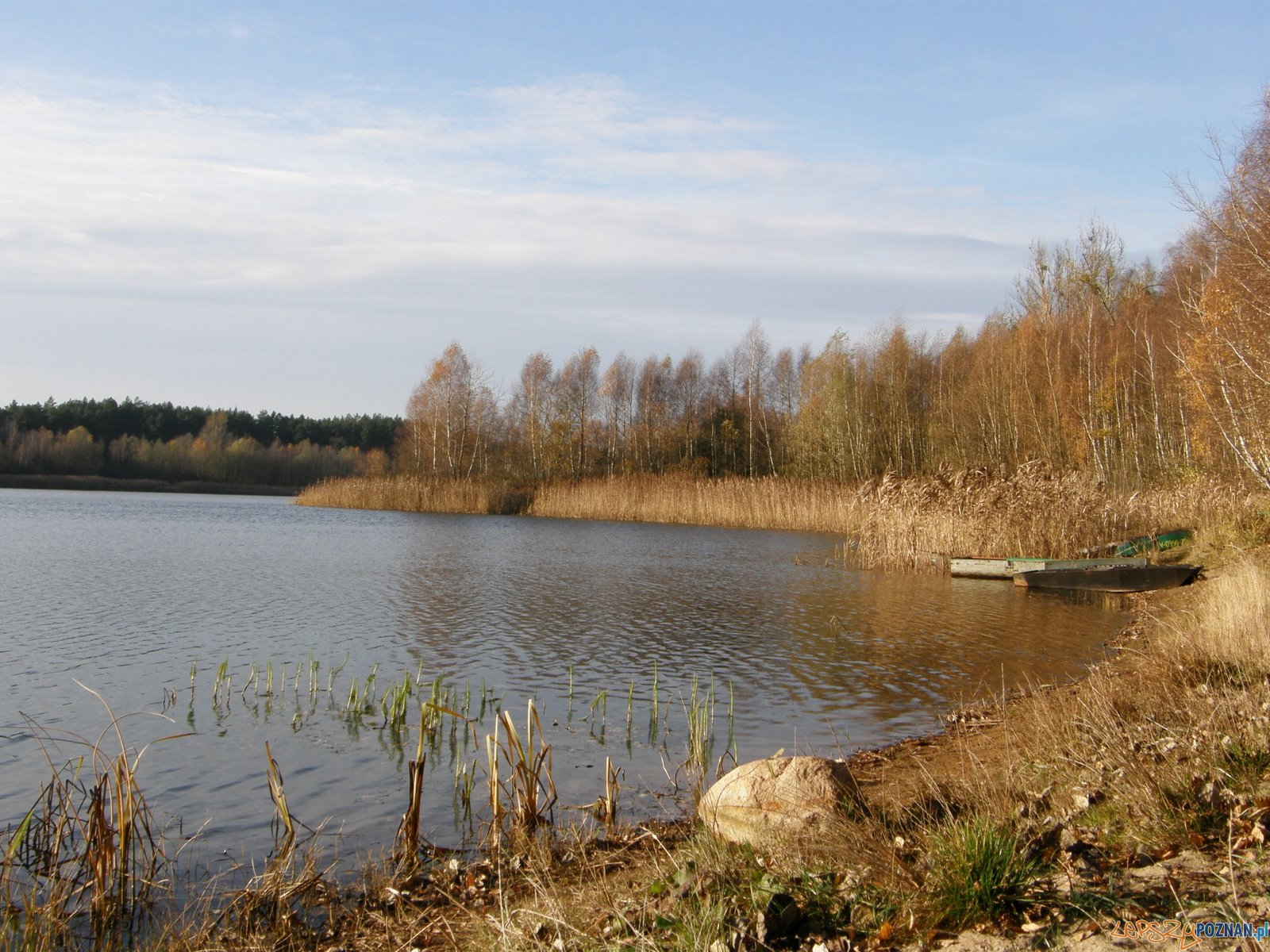 Jezioro Kamińsko Puszcza Zielonka  Foto: wikipedia.pl