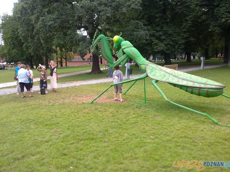 Gigantyczne owady w Starym Browarze (1)  Foto: