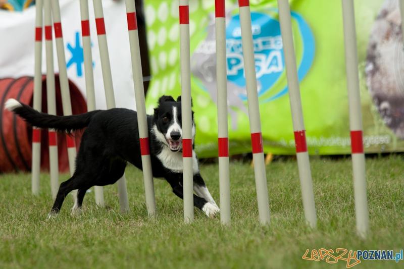 Dog Chow  w parku Cytadela 2012  Foto: Ewelina Gutowska