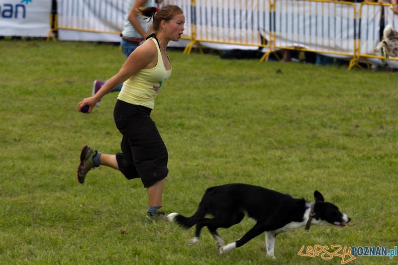 Dog Chow - Latające psy. Poznań Cytadela  Foto: lepszyPOZNAN.pl / Piotr Rychter