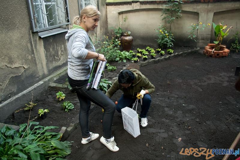 Odmień swoje podwórko_realizacja_Jeżyce  Foto: lepszyPOZNAN / Ewelina Gutowska