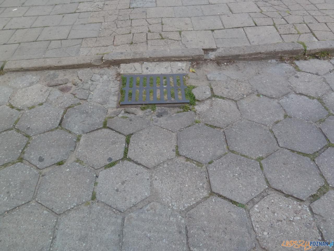 Szybka migawka - zielony Poznań  Foto: Maciej Koterba
