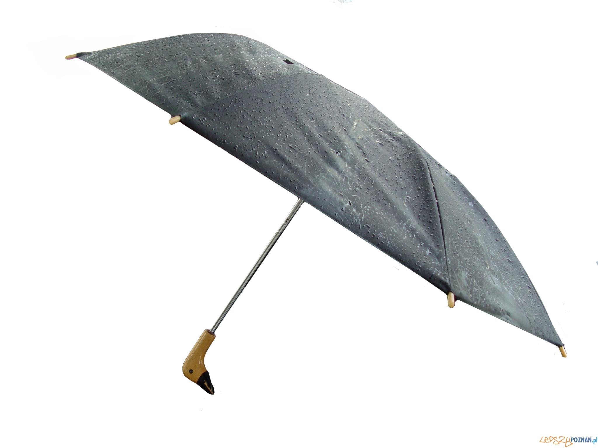 parasol  Foto: sxc
