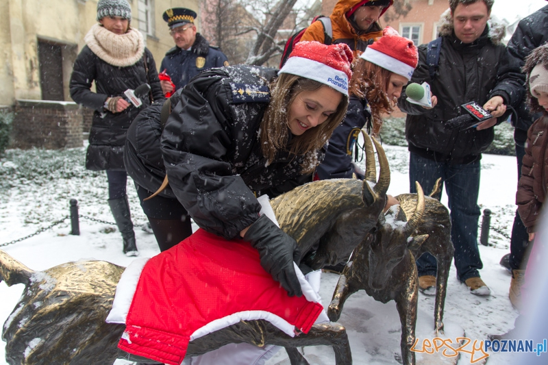 Koziołki przed Urzędemi Miasta będą miały ciepło   Foto: lepszyPOZNAN.pl / Piotr Rychter