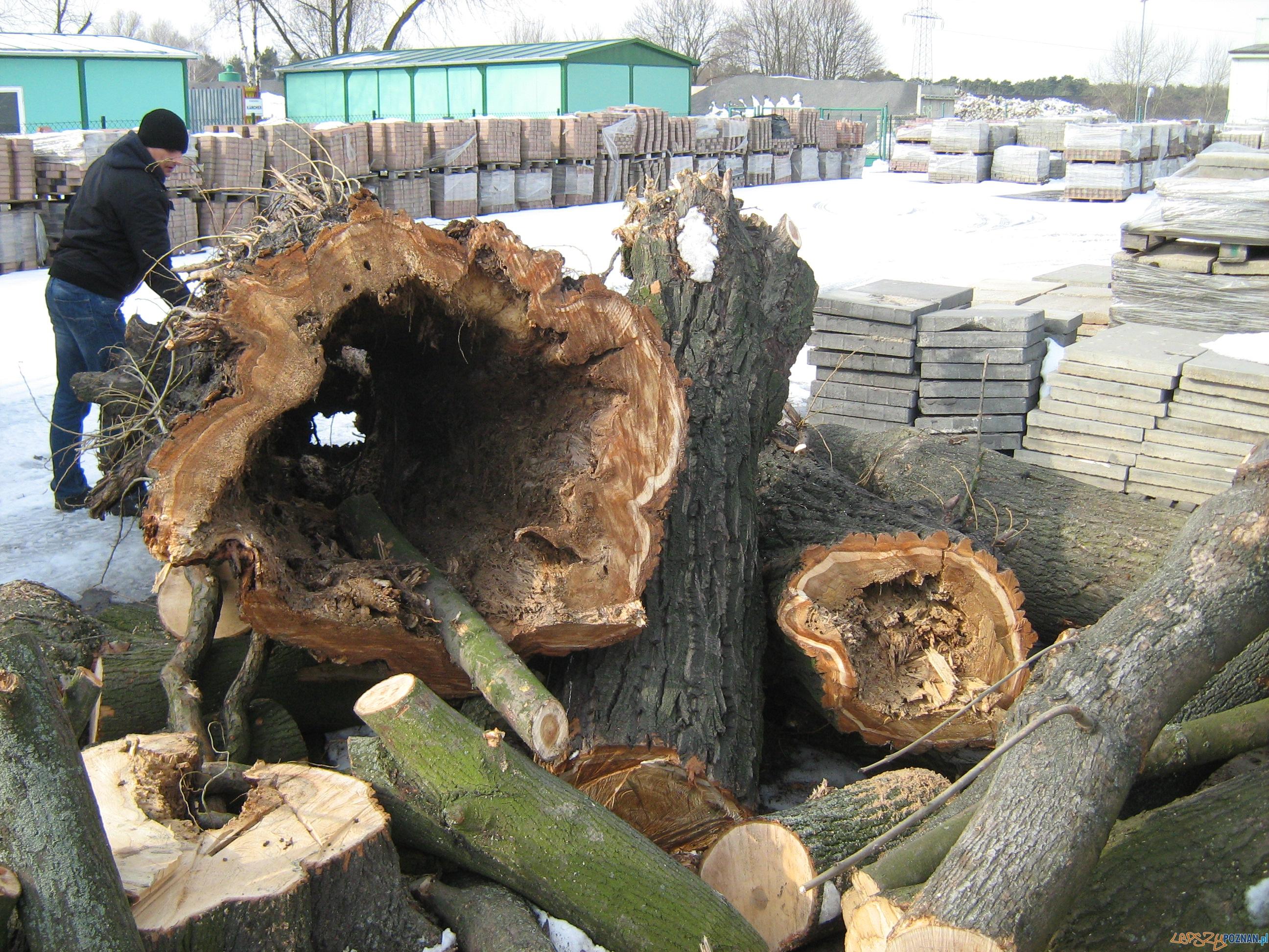 Wycinka drzew na Taczaka  Foto: ZDM