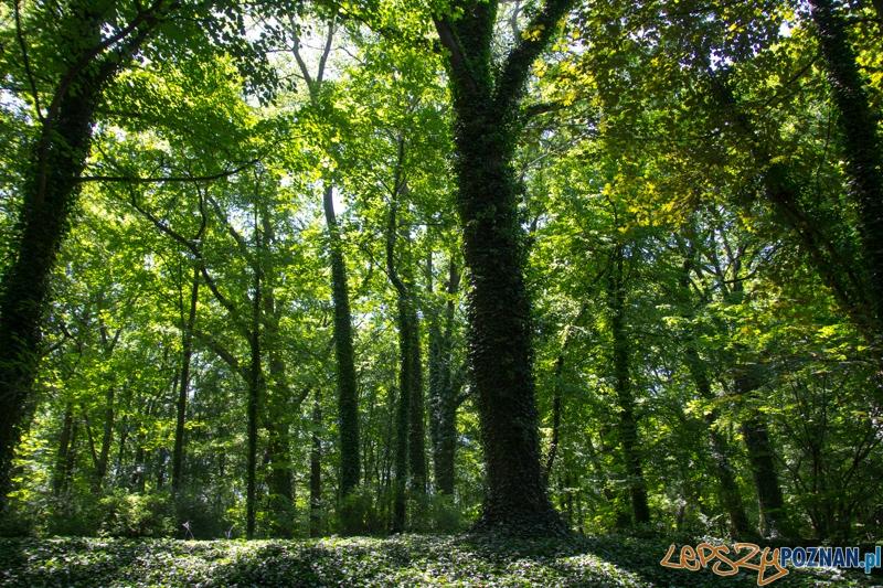 Zieloni mi w Parku Sołackim  Foto: lepszyPOZNAN.pl / Piotr Rychter