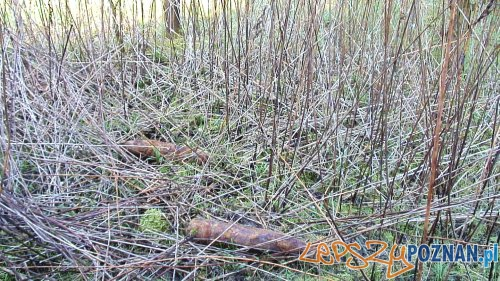 Niewybuchy w lesie (7)  Foto: Straż Miejska
