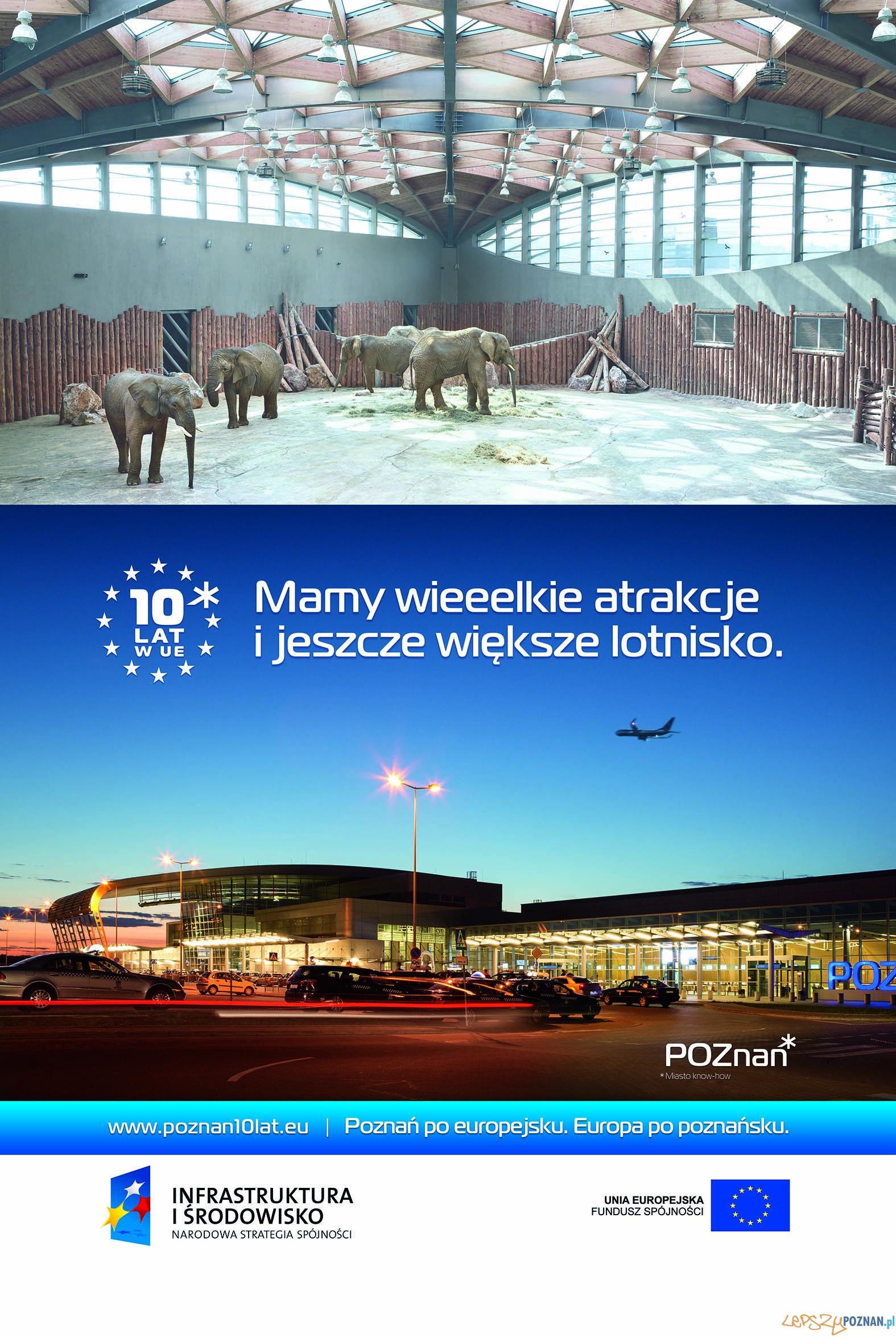 POZNAN citylight lotnisko+slonie-1  Foto: