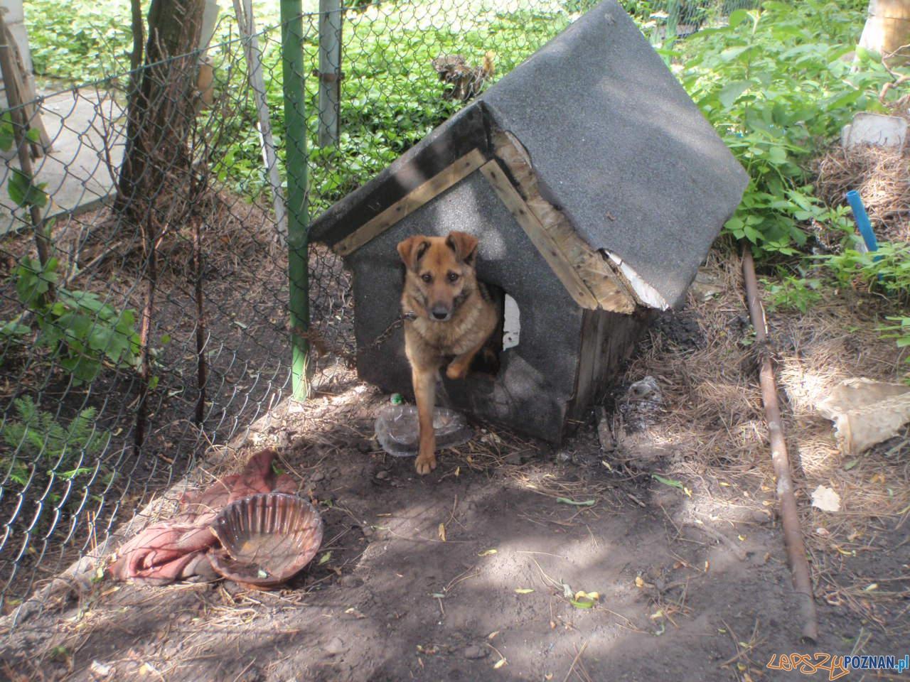 Pies na ogtódkach działkowych  Foto: Straż Miejska Miasta Poznania