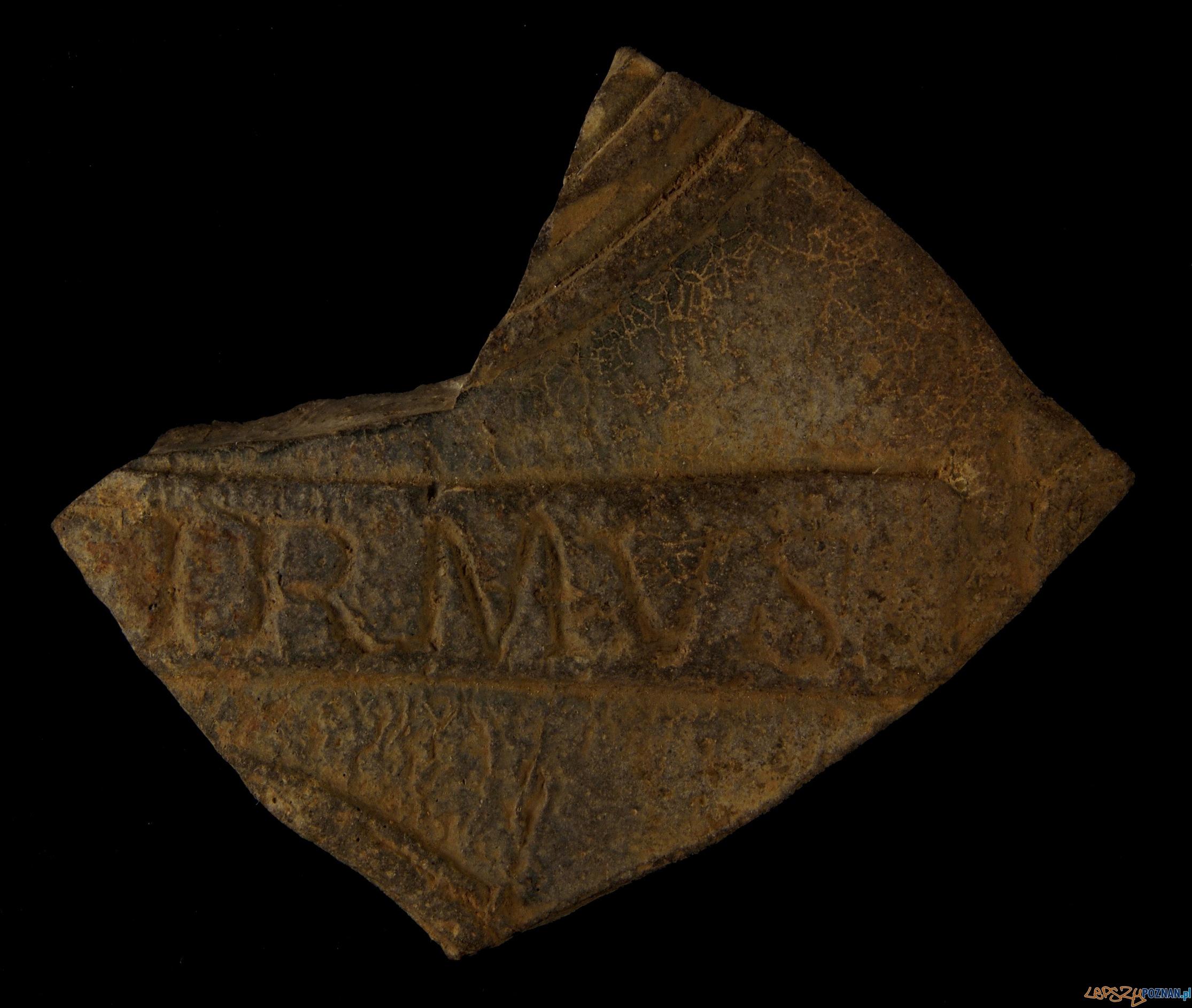 Fragment terra sigillata - Konin, okres rzymski  Foto: Muzeum Archeologiczne w Poznaniu