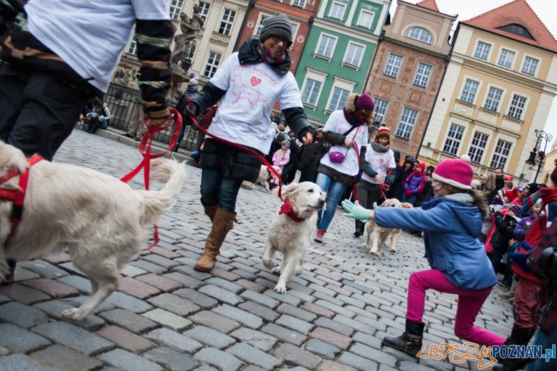 Golden retrievery podczas XXIII finału WOŚP  Foto: © LepszyPOZNAN.pl / Karolina Kiraga