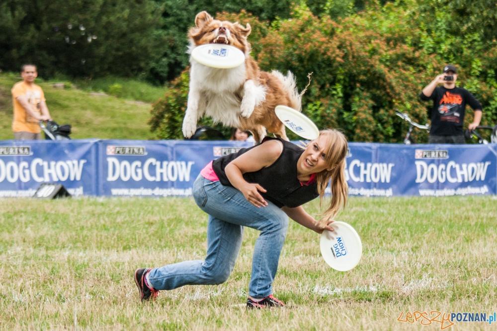 Dog Chow Disc Cup (27.06.2015) Cytadela  Foto: © lepszyPOZNAN.pl / Karolina Kiraga