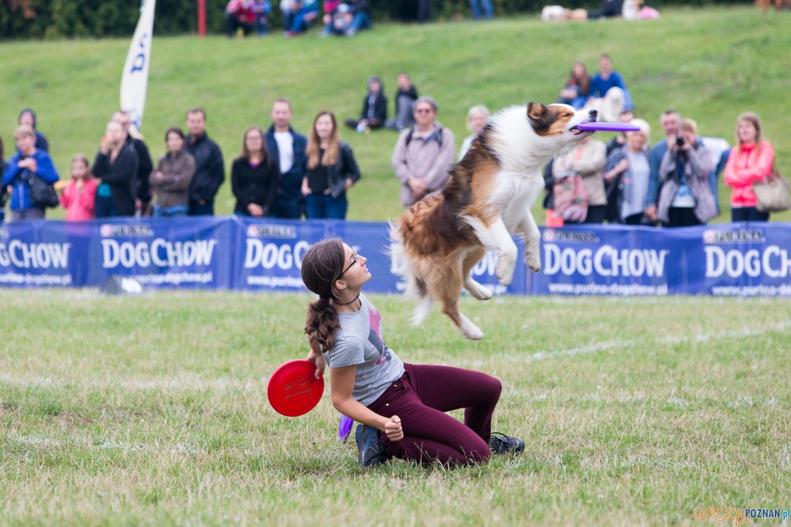 Dog Chow Disc Cup 2015  Foto: lepszyPOZNAN.pl / Piotr Rychter