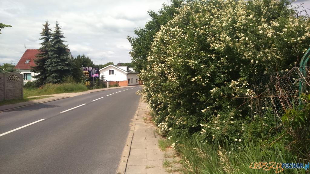 Zarośnięty chodnik w Kiekrzu  Foto: Straż Miejska