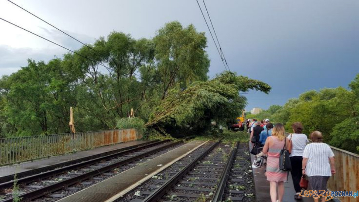 Gwałtowna burza przeszła nad Poznaniem - trasa pestki  Foto: Piotr Tarara