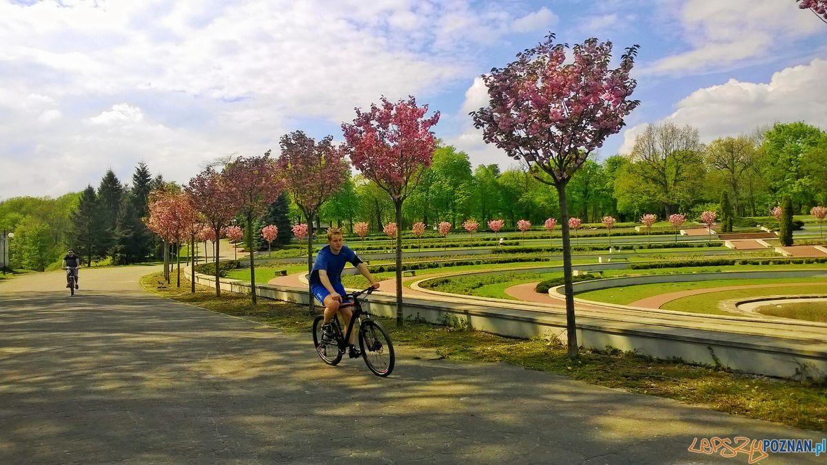 Park Cytadela-  rosarium  Foto: Tomasz Dworek