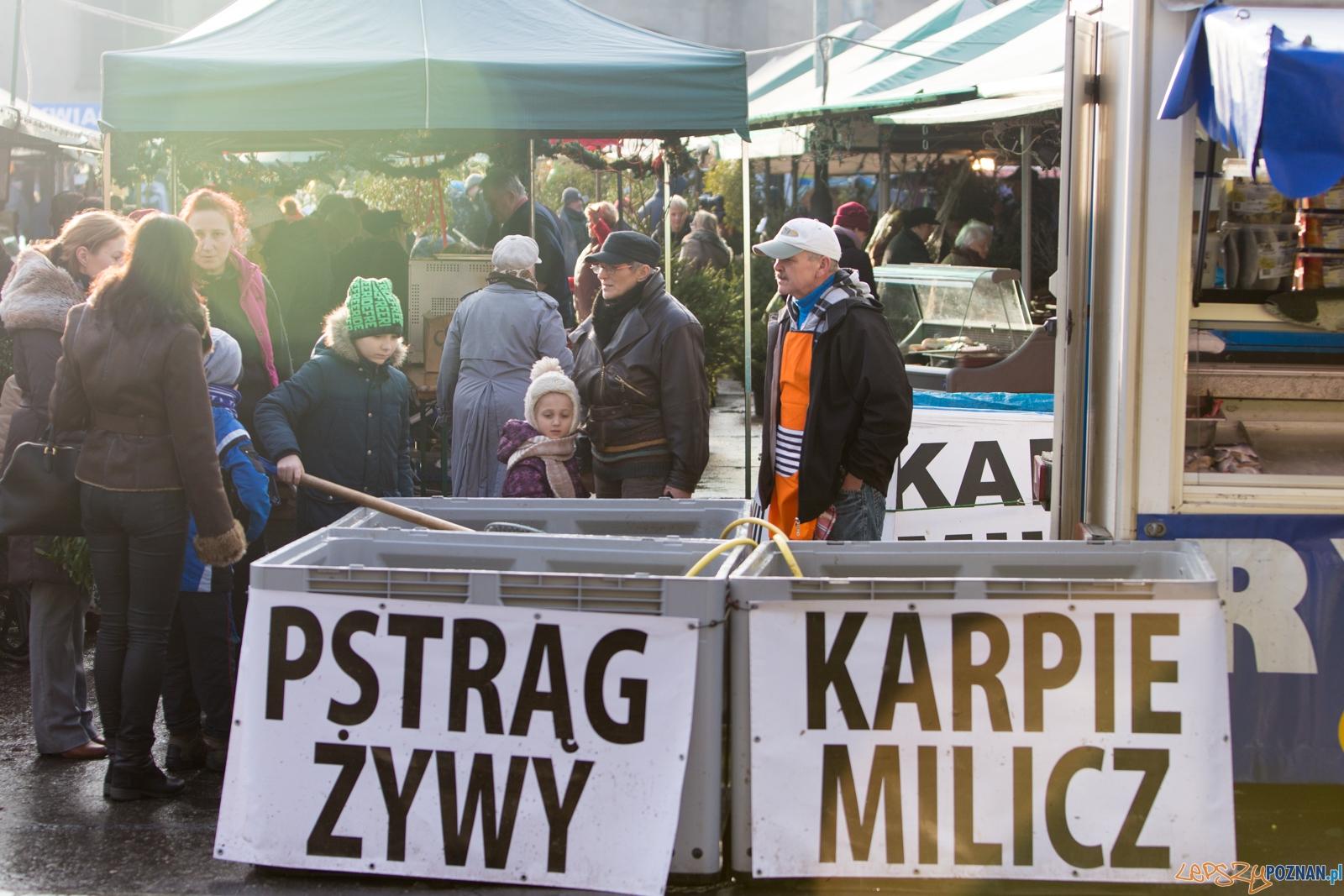 Karpie na rynku Bernardyńskim  Foto: lepszyPOZNAN.pl / Piotr Rychter
