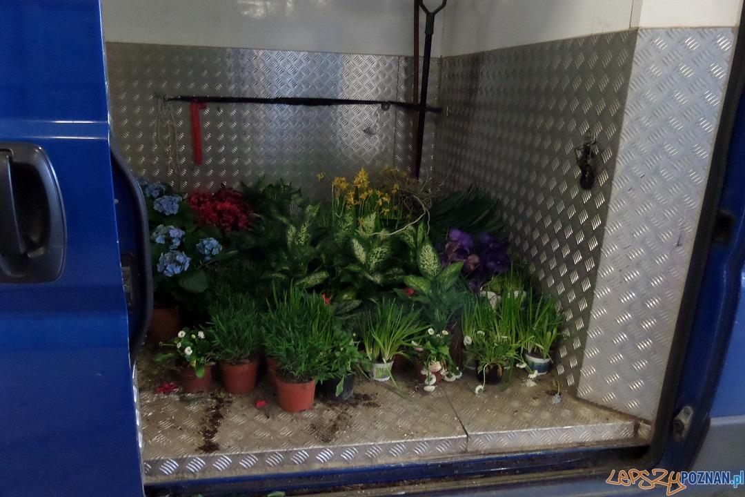 Kwiaty z PCC  Foto: materiały prasowe