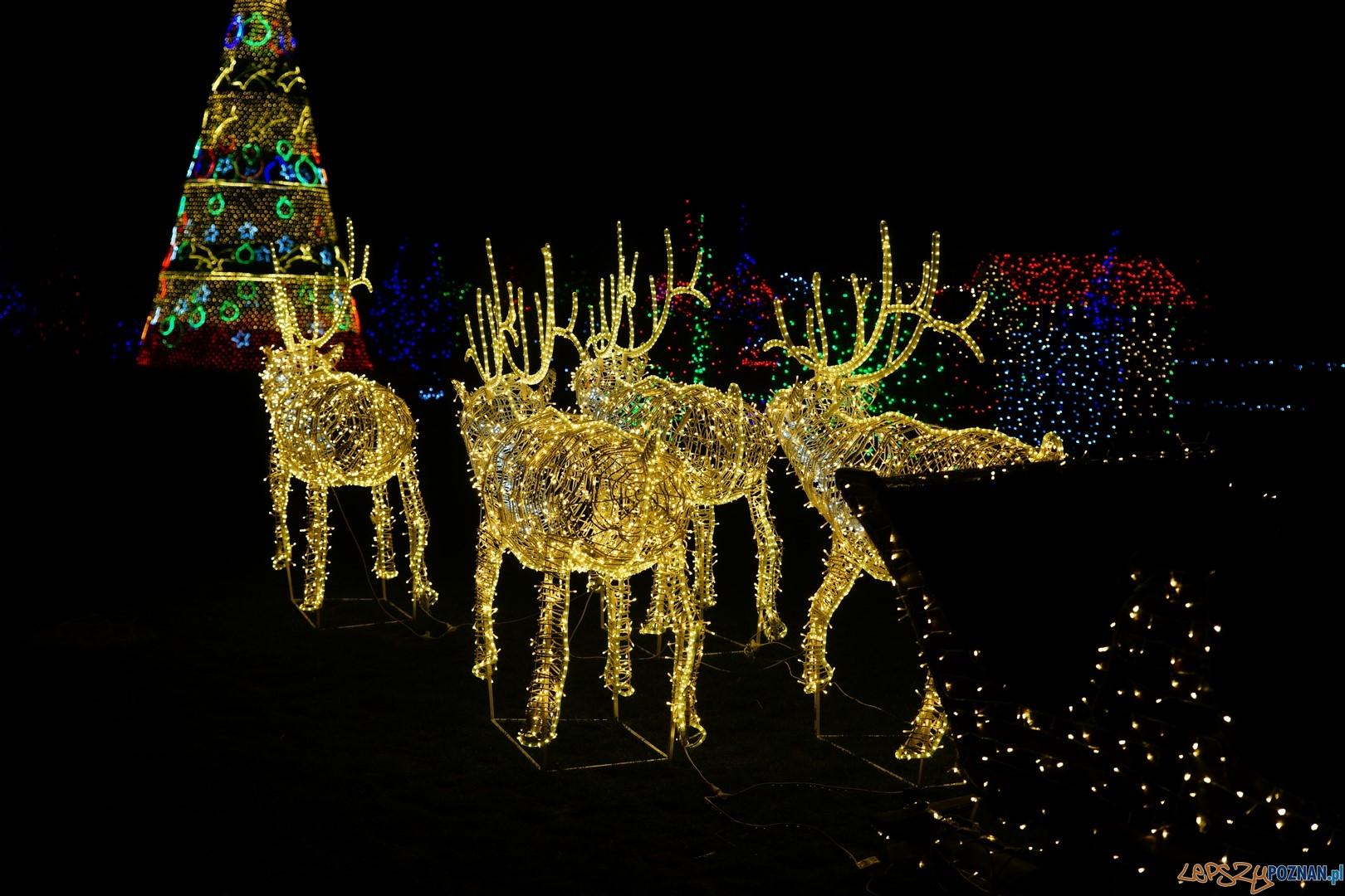 Kraina Świętego Mikołaja  Foto: ExPress / materiały prasowe