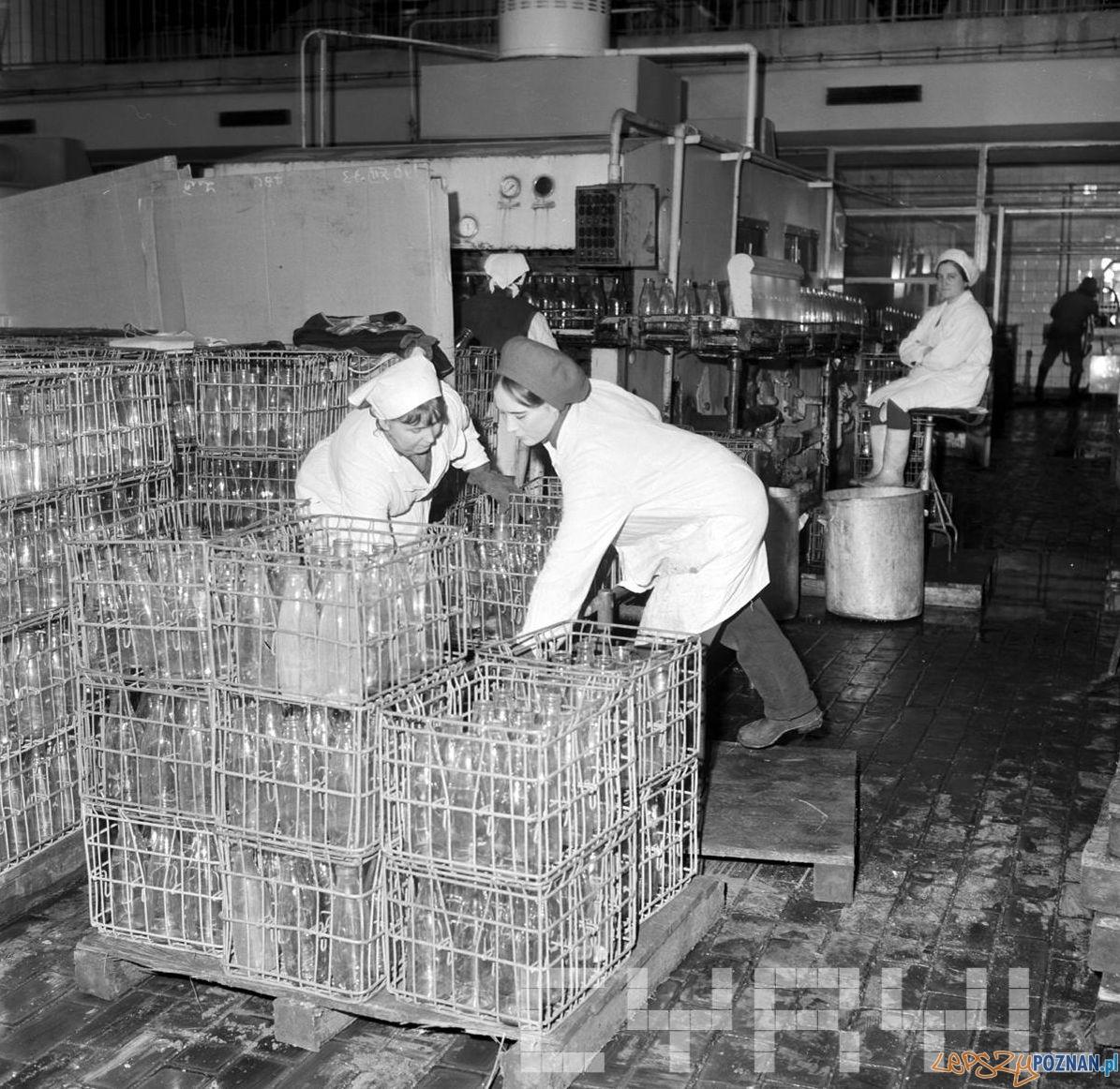 Mycie butelek w Spółdzielni Mleczarskiej Dębiec [21.01.1974]  Foto: Stanisław Wiktor / Cyryl