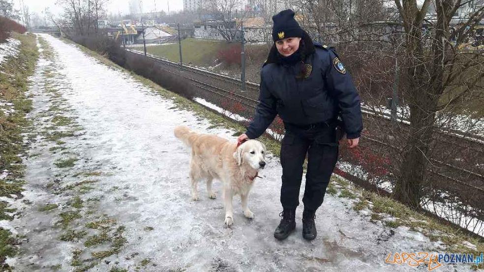 Interwencje Straży Miejskiej - pies biegający wzdłuż trasy PST  Foto: Straż Miejska