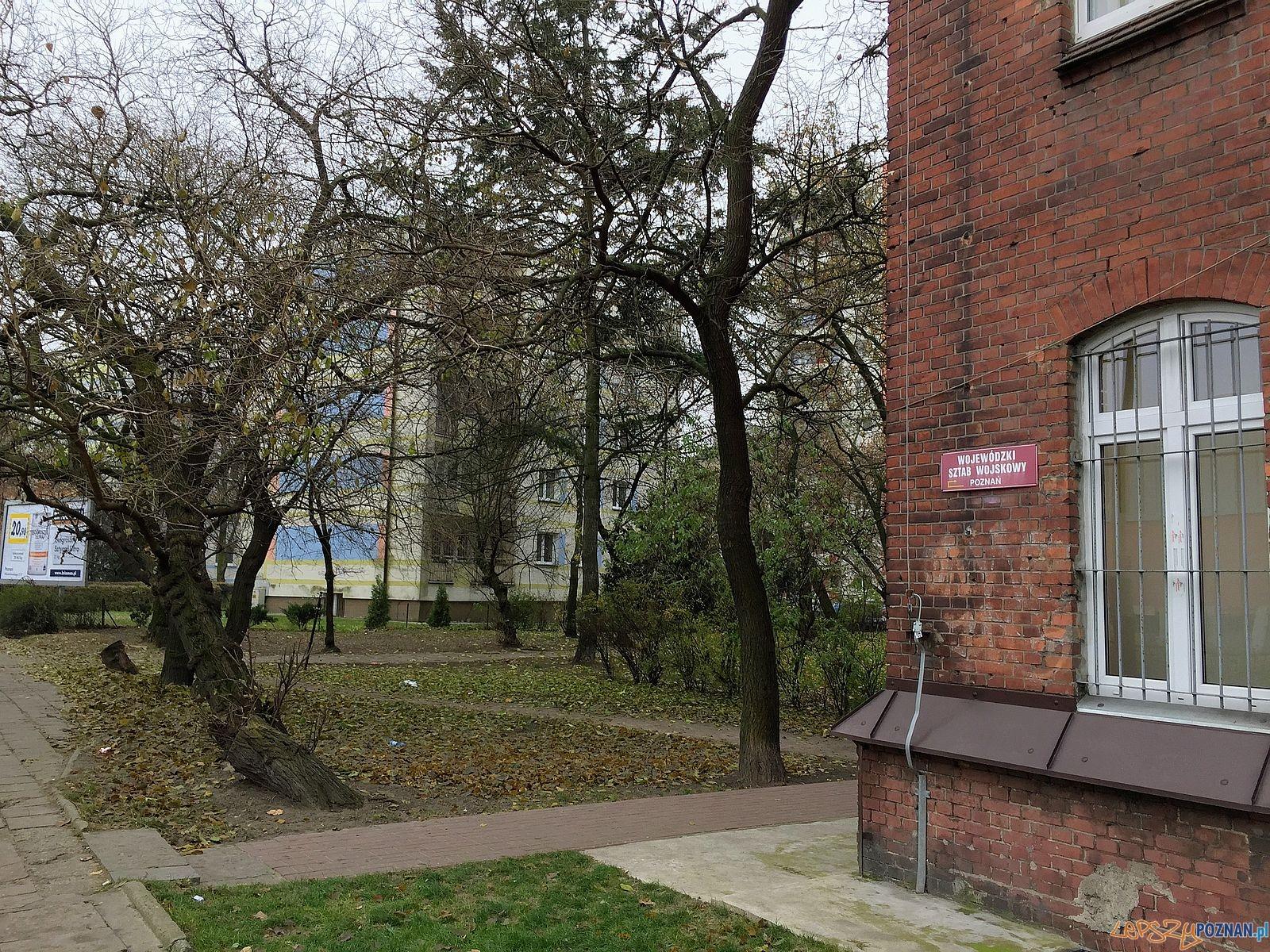Tak było przed wycinką  Foto: Marcin Liminowicz / Rada Osiedla Stare Miasto