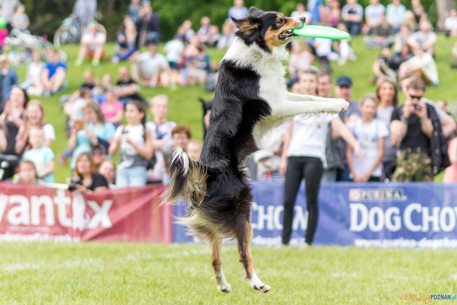 Latajace psy  Foto: lepszyPOZNAN.pl / Ewelina Jaśkowiak