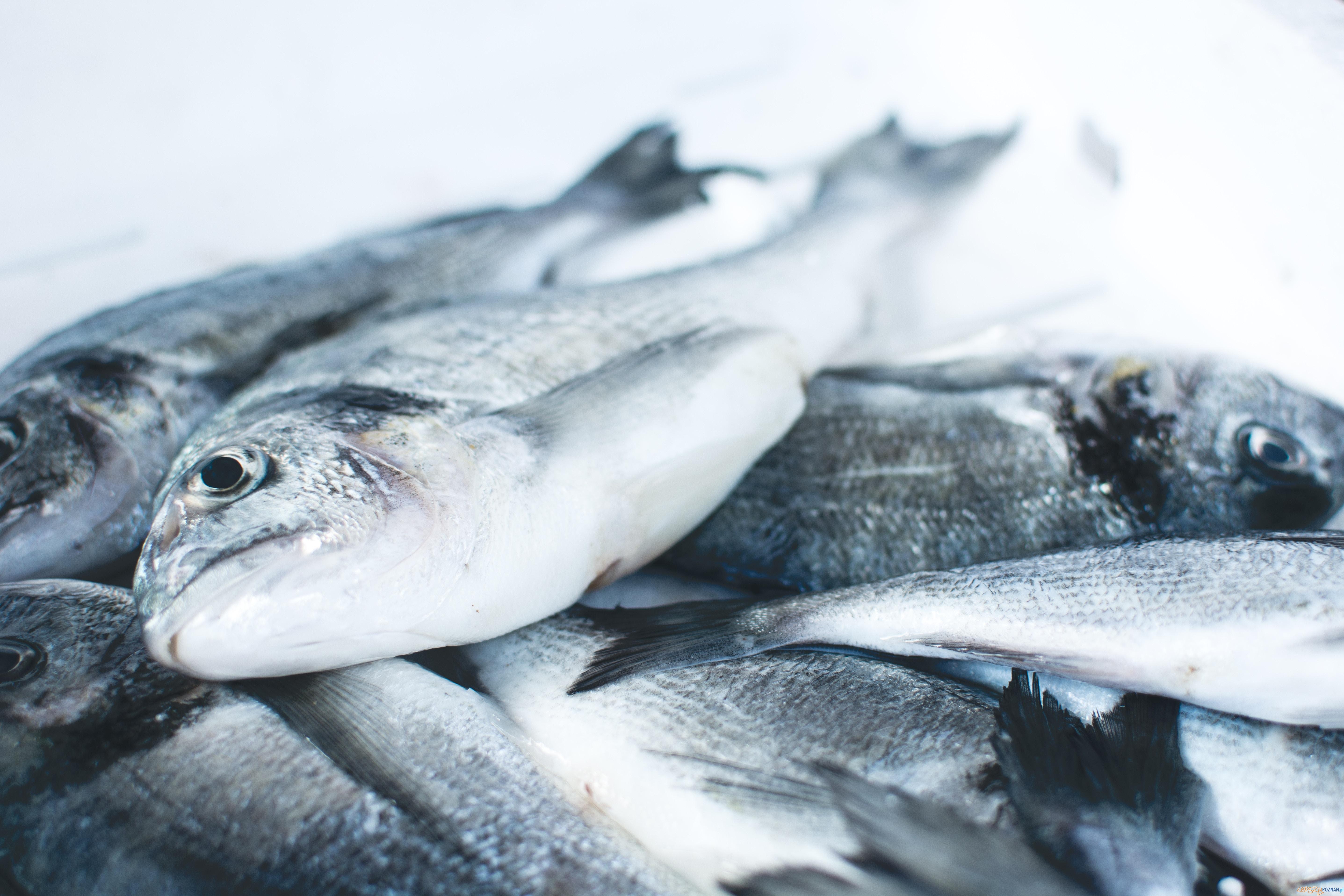 ryby  Foto: Jakub Kapusnak