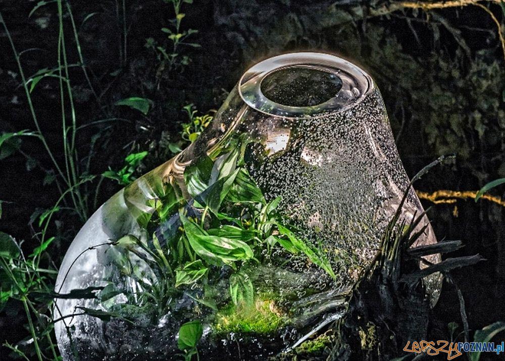 Wystawa Forest Forever  Foto: materiały prasowe SB