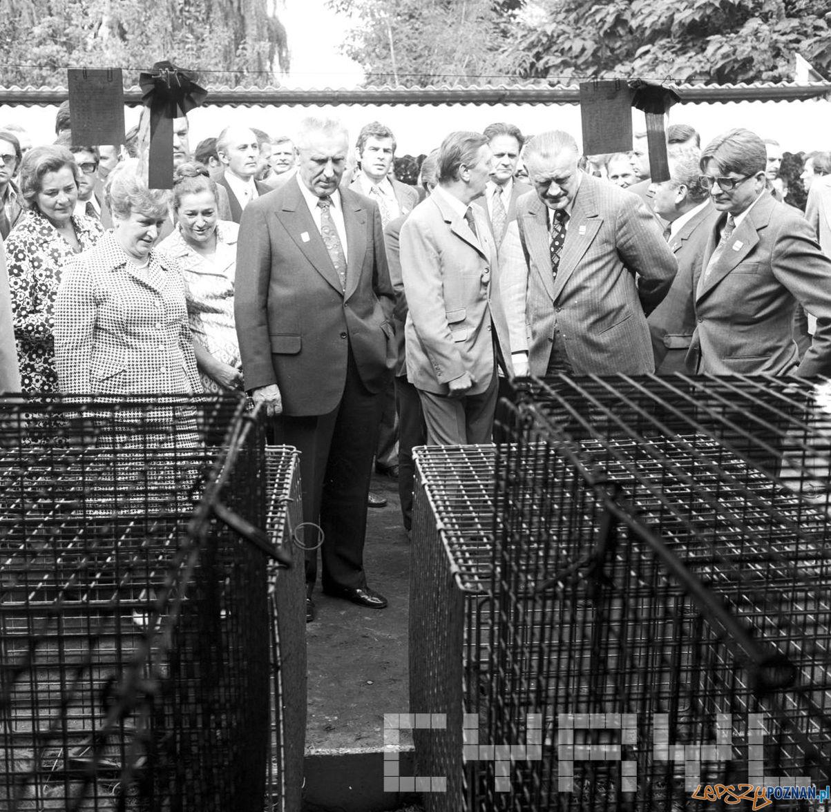 E. Gierek i P. Jaroszewicz na wystawie rolniczej z okazji Centralnych Dożynek - 1.09.1974  Foto: Stanisław Wiktor / Cyryl
