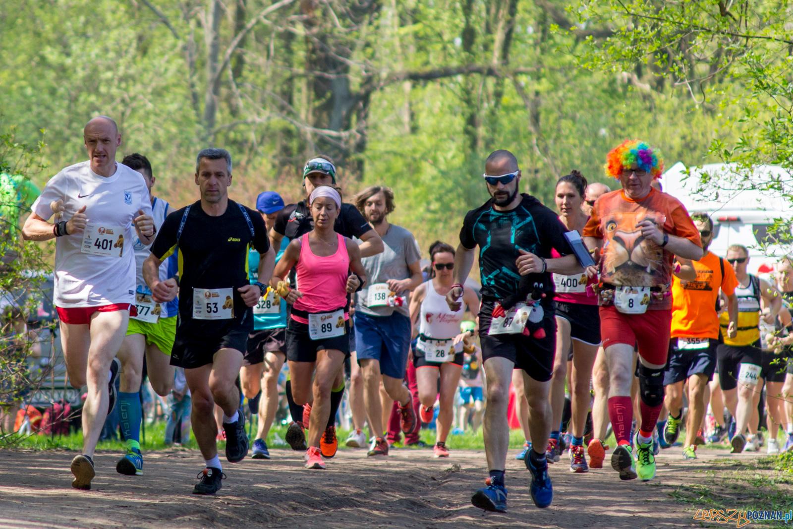 Bieg z Misiem  Foto: lepszyPOZNAN.pl / Ewelina Jaśkowiak