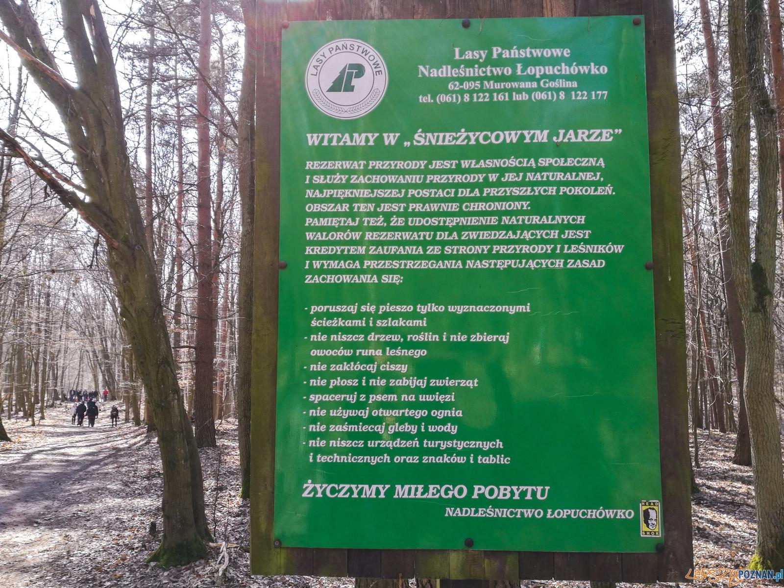 Śnieżycowy Jar  Foto: LepszyPOZNAN.pl / Paweł Rychter