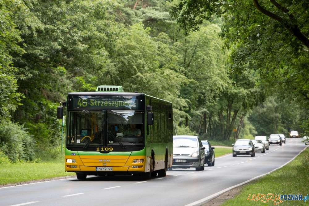 Autobus 45 Strzeszynek  Foto: Zarząd Transportu Miejskiego