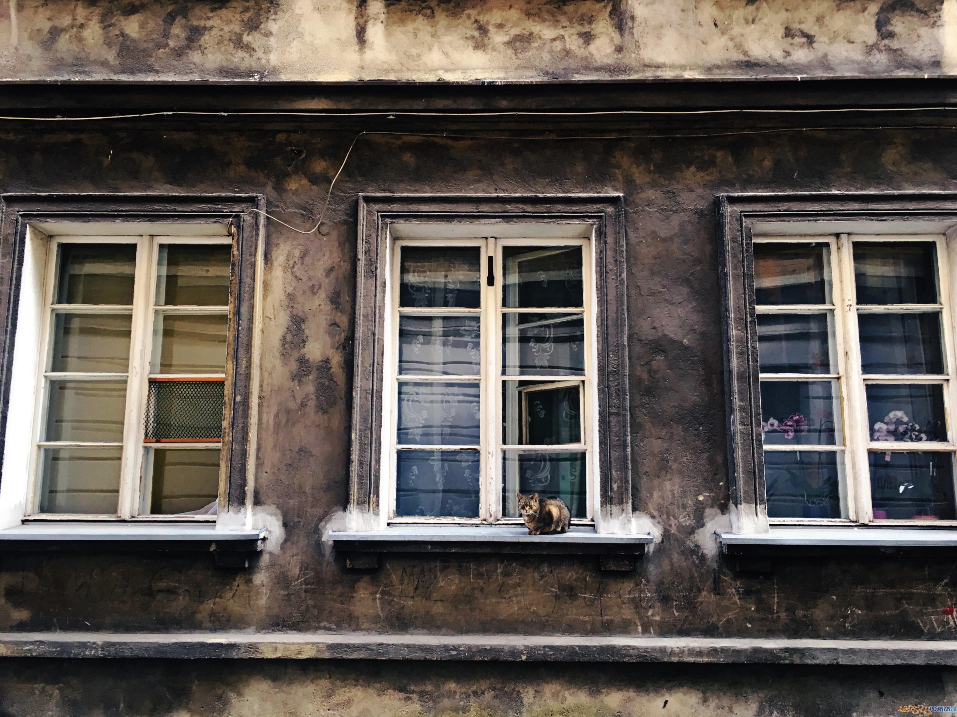 6-wyróżnienie-Zofia-Karafa-VIII-LO-im.-Adama-Mickiewicza(1)  Foto: