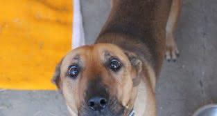 pies znaleziony 29 grudnia  Foto: Schronisko dla zwierząt w Poznaniu
