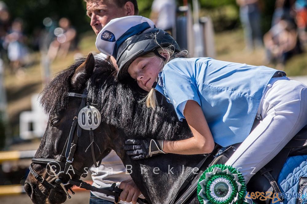 Pony Games  Foto: materiały prasowe