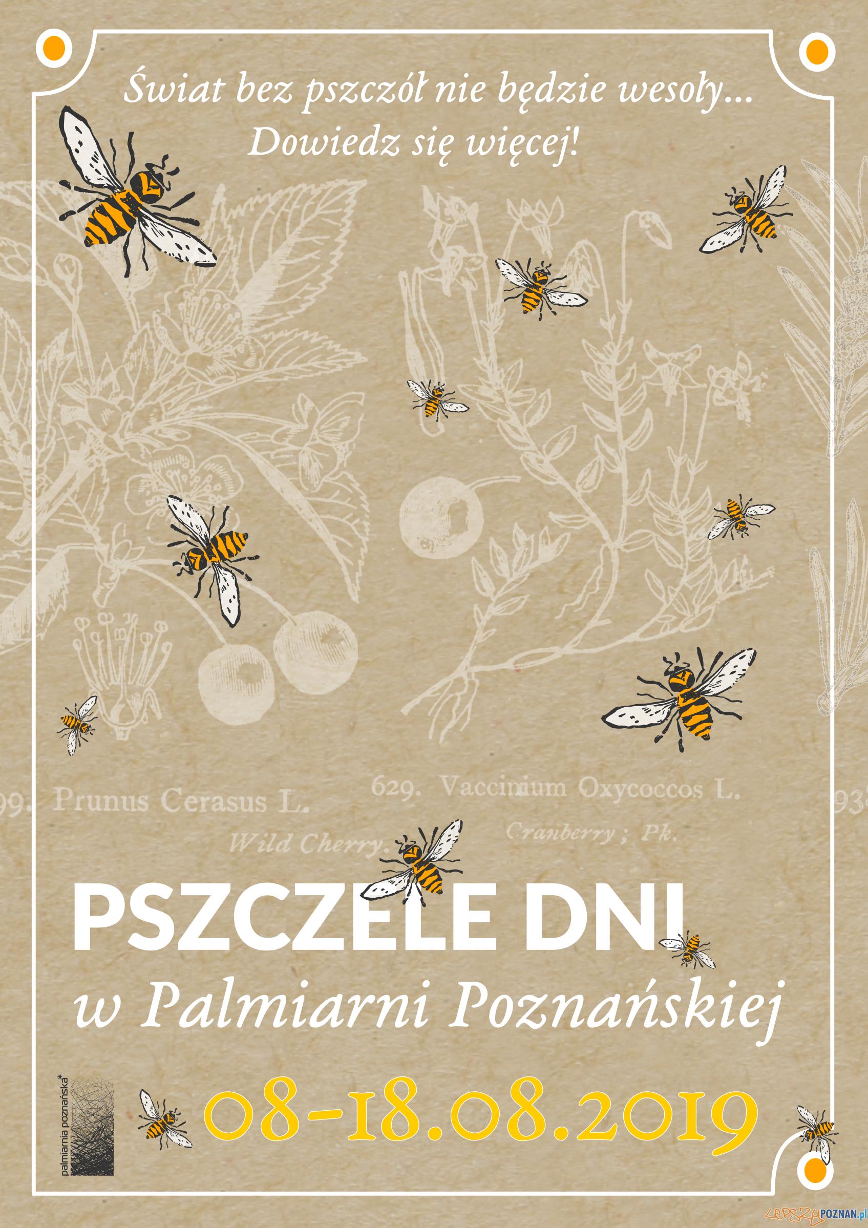 Dzień Pszczół w Palmiarni Poznańskiej  Foto: materiały prasowe
