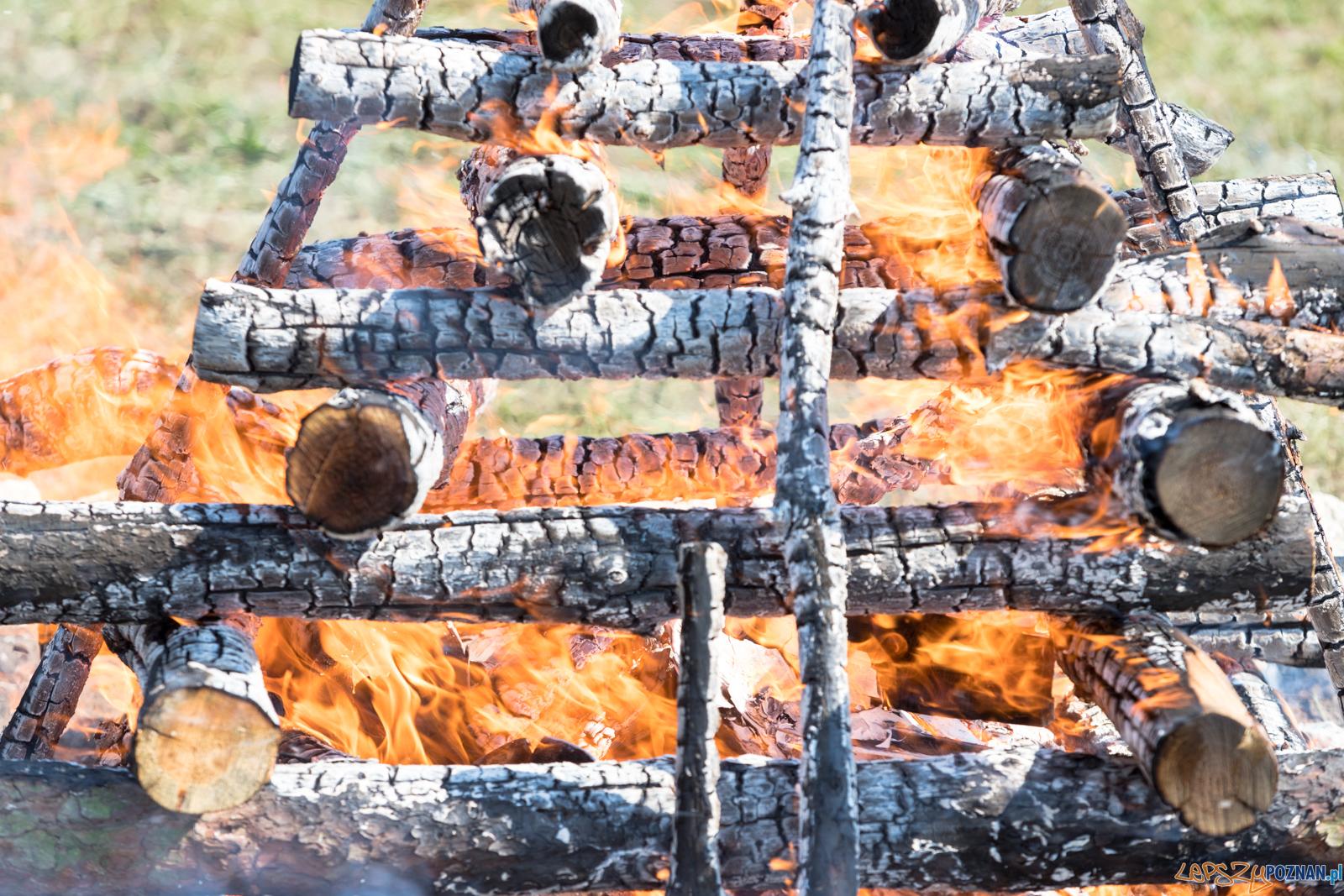 Spalenie kła Ninio  Foto: lepszyPOZNAN.pl/Piotr Rychter