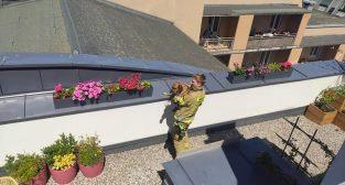 Pies uwięziony na dachu  Foto: JRG 2
