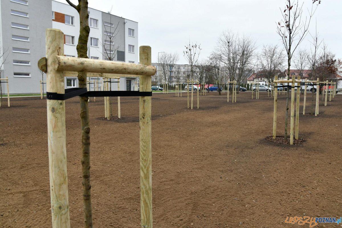 Drzewa frekwencyjne na Strzeszynie Foto: UMP