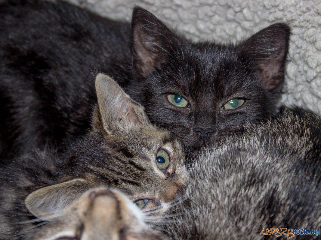 Koty w Schronisku dla Zwierząt w Skałowie Foto: Schronisko dla Zwierząt w Skałowie